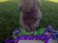 Spanky is the second largest in our litter but a leader