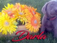 Darla is the largest girl in our litter and she is