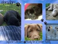Putting together waiting lists for Forever Labrador's