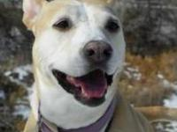 Labrador Retriever - Daisy - Medium - Adult - Female -