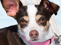 Lacey's story LACEY IS IN FOSTER CARE! PLEASE FILL OUT