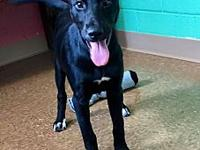 Lacey's story ~~ Lacey has been spayed and is ready for