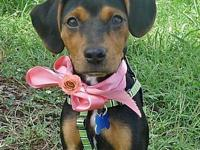 Lacie Girl's story Her adoption fee of $200.00 includes
