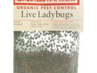 Ladybugs eat aphids, whiteflies, thrips, spidermites,