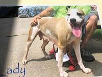 Lady's story PAW Animal Shelter is a high intake No