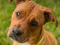 Lady's story Lady is an energetic pup looking for a fun