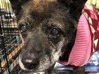 Lady Bird's story At Wags and Whisker's Pet Rescue:
