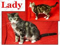 Lady's story Lady is a beautiful tabby that needs a