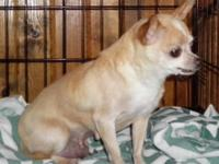 Emma is a retired breeder looking for a nice home to