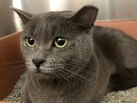 Lady Grey's story All of our adoptable pets are spayed