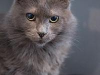 Lady Grey's story Lady Grey is many things. She is