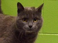 Lady Grey's story Meet Lady Grey! Lady Grey is a very