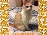 Lady Heather was rescued from a local shelter. She had
