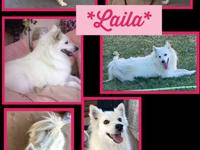 Meet Laila! Laila is a 4 year old, female, larger Mini