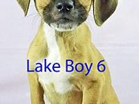 Lake Boy 6's story ADOPTION APPLICTAION: