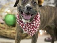Lala's story !!! AVAILABLE for Adoption at ACCT Philly
