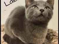 Lala's story *All cats are litter box trained,