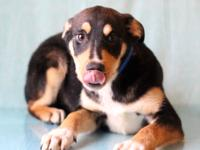 Lance #9870 is an adorable 4-month-old male
