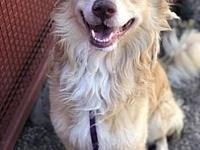 Lance's story Handsome man Lance!! He is a male Golden