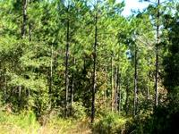 Land for Development in Alachua, Florida. Asking cost: