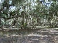 Land for Development in Jasper, Florida. Asking cost: