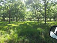 "5 Acre lot for sale in ""The Groves"" Equestrian"