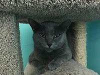 Lane's story Lane Age: 3 years old DSH/Spayed Female