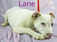 Lane's story ADOPTION APPLICTAION: