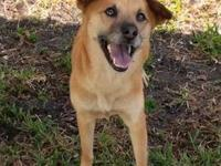 Laney's story Laney came to us with heartworm disease,