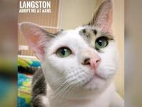 Langston's story Hi, I'm Langston! I'm a sweet young