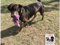 Lani is a 5 year old Catahoula Dachshund mix. She is