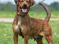 Lanie's story Lanie is a beautiful, loving girl who is