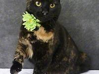 Lantana's story Lantana is a super sweet young