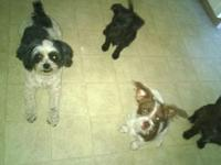 Cute puppies 6 months old some training great lovable