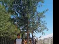 Huge 100 gallon Live Oak Trees for $300 a piece. Need