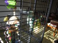 I have a large parrot cage for sale, play gym on top,