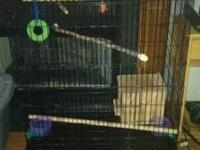 Large Cage and 2 Cockatiels for sale $200. Cage is
