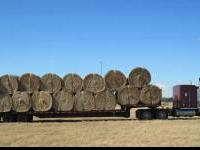 200 large 5' x 6' round bales of Rice Straw available