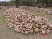 Bug's Gourd Farm has a large variety of gourds for