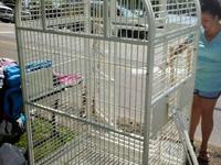 "Large White Metal Victorian Bird Cage 74"" Tall w/"