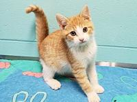 Larry's story Larry is a sweet 3 month old male kitten.