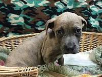 Larry's story Larry is a brindle and white male Hound