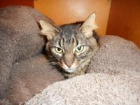You can visit with Larry at the Creve Coeur Petco cat