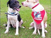 Larson - N's story Meet Wilmington and Larson  a bonded
