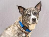 Laska's story Laska is a stray that was found and was