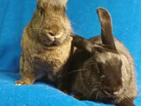 I'm Latte, the agouti rabbit on the left. I'm a big,
