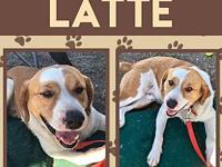 Latte's story Latte came from a Texas rescue that