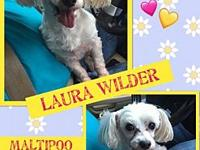 Laura Wilder's story You can fill out an adoption