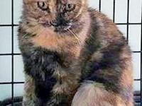 LAUREL is an exquisite, quiet little Tortie girl, who
