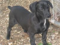 *** THIS SWEET PUP IS LOCATED IN BENTON, ARKANSAS **